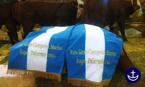 Palermo 2015