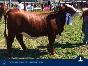 Exp-Corrientes-2018-7