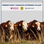 Garantia-Extendida-Pilaga-web
